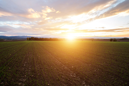 Beautiful sunset over the green large field photo