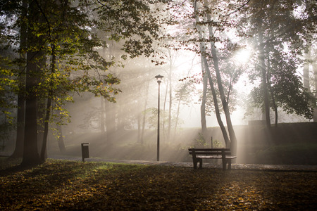 woodland  horror: Foggy park in late autumn in the morning