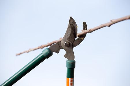 De schaar snijdt de tak in de tuin