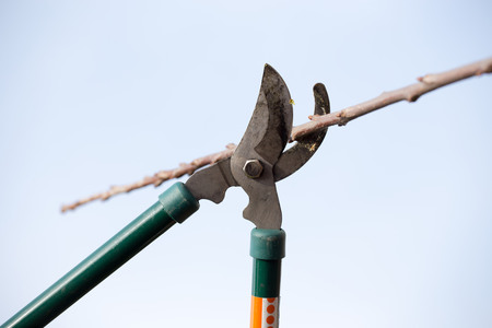 Las tijeras de corte de la rama en el jardín Foto de archivo - 34713785