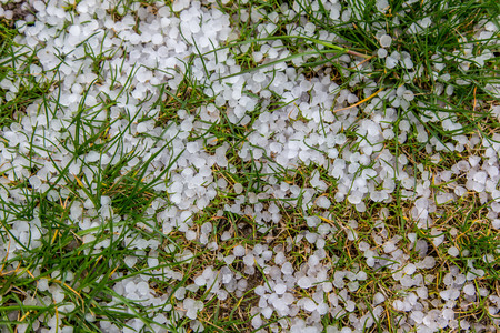 The pieces of hail on the grass Standard-Bild