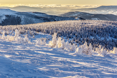 frozen trees: Frozen trees in the high mountains Alps Austria