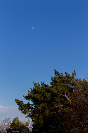 Moon on the background of blue sky photo