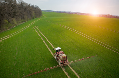 green field: Aerial view of the tractor spraying the chemicals on the large green field