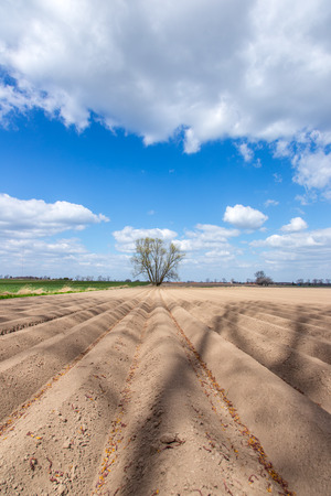 fertile land: Large brown field with numerous straight rows Stock Photo