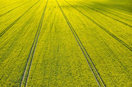 colza: Vista a�rea del campo de colza grande