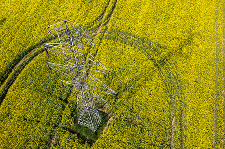 colza: Aerial view on the powerlines on the large colza field