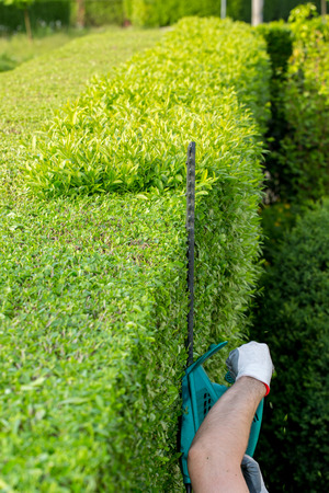 cut off saw: Cutting the branches of the hedge using electric saw Stock Photo