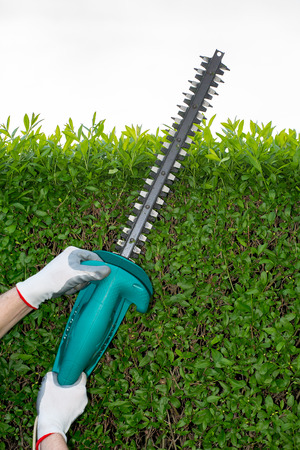 Cutting the branches of the hedge using electric saw Stock Photo - 42136331