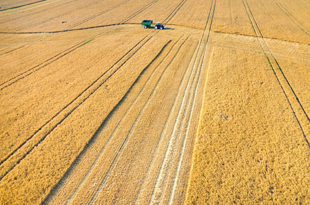 crop harvest: Aerial view on the combines and tractors working on the large wheat field