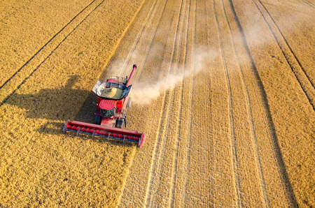 harvest: Aerial view on the combines and tractors working on the large wheat field