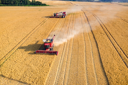 harvester: Aerial view on the combines and tractors working on the large wheat field
