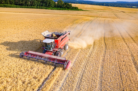 Aerial view on the combine working on the large wheat field
