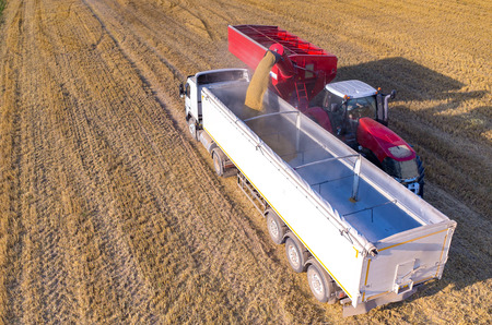 loading truck: Aerial view on the combine filling the truck with the wheat seeds
