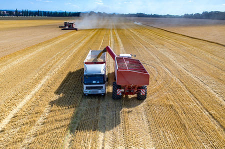 field work: Aerial view on the combine filling the truck with the wheat seeds
