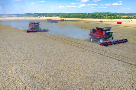 combines: Aerial view on the combines and tractors working on the large wheat field