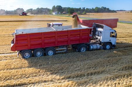 Luchtfoto van de maaidorser het vullen van de vrachtwagen met de tarwezaden