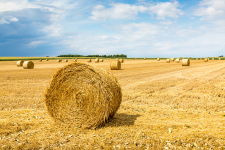 hay field: Large view on the wheat field with hay bales Stock Photo