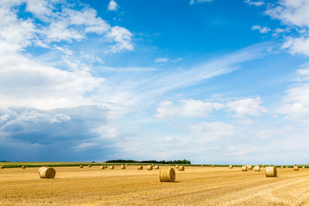 hay bales: Large view on the wheat field with hay bales Stock Photo