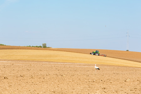 agricultural farm land: Large view on the tractor working and the storks staying on the field