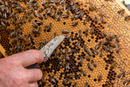 cluster house: Close view on the bees working on the honeycomb