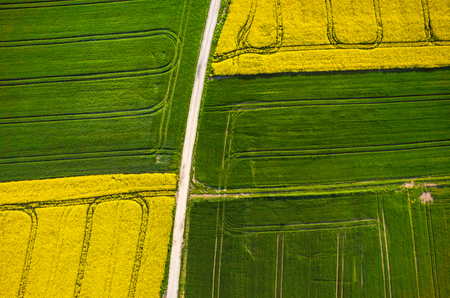 colza: Aerial view on the large colza field