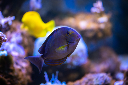 Close view on the coral reef fish