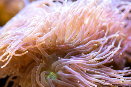 Close view on the small colorful polyp
