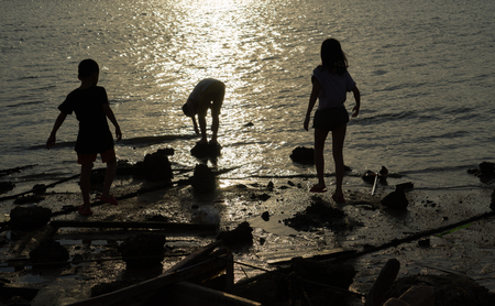 collecting: children Collecting shells at beach while sunset