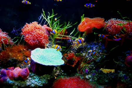 Colorful aquarium photo