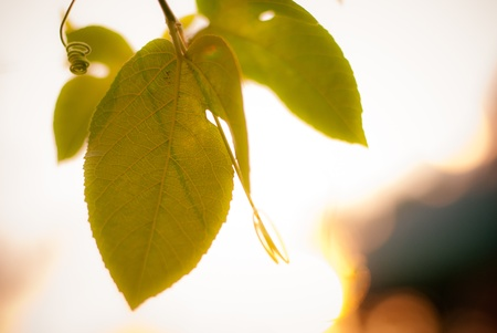 Green leaf on bokeh graphy and light background photo