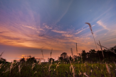 Prairie Sun down with beautiful sky and wind in Thailand Stock Photo - 13272019