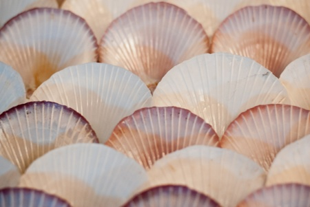closeup decoration with shell sea wall - shell wall beach style decoration photo