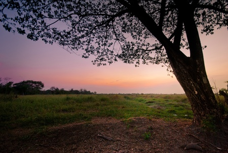 huge tree with beautiful twilight and green grass in large area landscape photo
