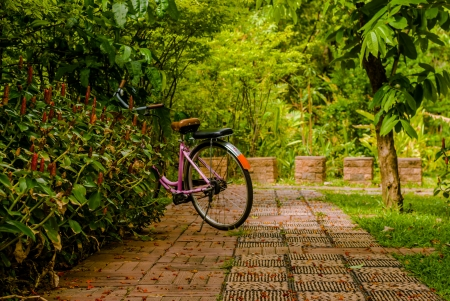 Pink bicycle is parking in the park with shallow depth of field and some red flowers in the warm weather photo