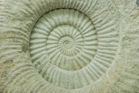 lumaca: Closeup di una struttura preistorica shell ammonite fossile di sezione trasversale - texture a spirale e la curva