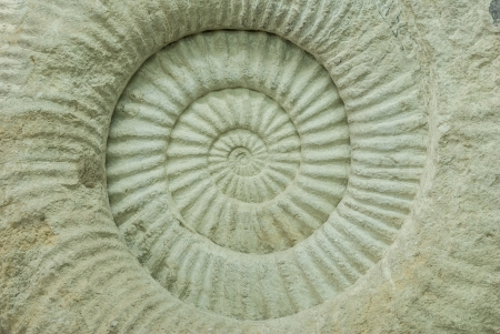 Closeup of an ammonite prehistoric fossil shell cross section texture - spiral and curve textures