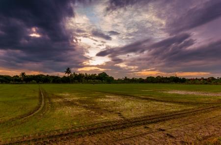 tropica ripe paddy farm landscape in storming sky - Fresh green wheat field photo