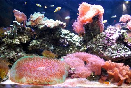 Colorful aquarium photo