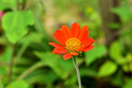 Beauty orange flowers with green leaves background photo