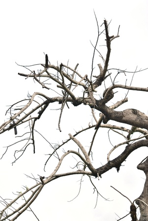 leafless: Dead tree isolated - bare tree - Pattern of dead tree - dry part of the tree Stock Photo