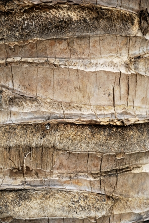 Detail of a Coconut palm - Palm tree bark texture - Rough brown palm tree wood bark natural texture background photo