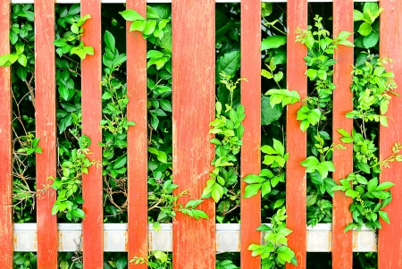 Natural background - Wooden fence with green plants Stock Photo - 14965883