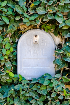 gray mailbox surrounded by blossoming tree or bush photo