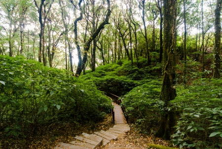 A scene looking and walk path straight into a dense tropical rain forest - jungle - Walking trail in tropical forest - Jungle forest scenic background