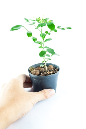 Home plant in pot with hand holding isolated on white background photo