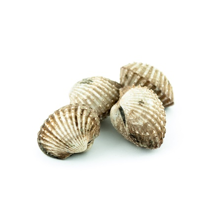 cockle: Steamed cockles - cockles isolated on white background -Fresh raw cockles