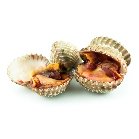 cockles: Steamed cockles - cockles isolated on white background -Fresh raw cockles