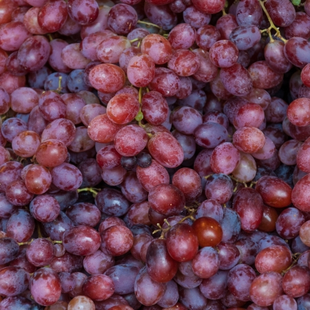 background freshly picked red grapes