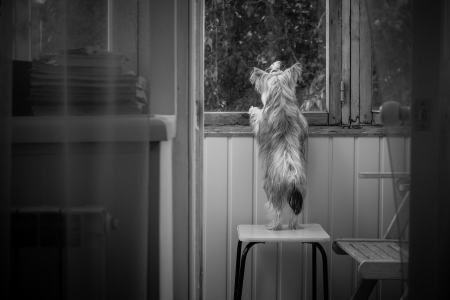 mistress: Cane amante in attesa